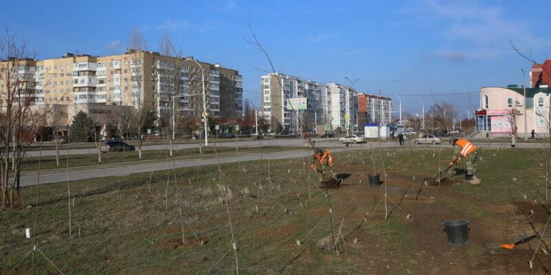 Более 60 саженцев липы и клена высажено взамен молодых деревьев, погибших этой зимой